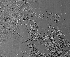 Pluto sublimation pits