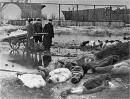 Starvation in Leningrad