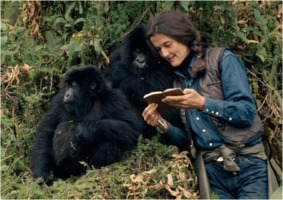 Dian Fossey and mountain gorillas