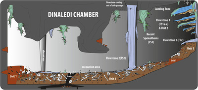 Dinaledi Chamber within Rising Star Cave